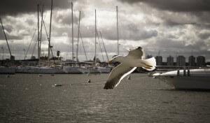 bird-212447_1280
